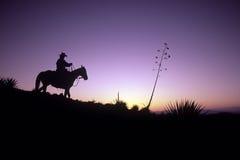 Cowboy mostrado em silhueta Imagens de Stock