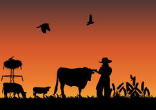 Cowboy nel campo Fotografia Stock