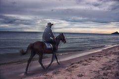 Cowboy nel mare Immagini Stock Libere da Diritti