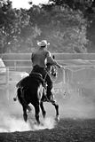 Cowboy nel rodeo Immagine Stock