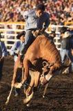 Cowboy no Bronc Imagem de Stock Royalty Free