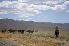 Cowboy no deserto Fotografia de Stock