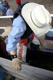 Cowboy novo Fotos de Stock Royalty Free