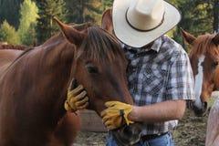 Cowboy och häst Arkivbilder