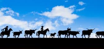 Cowboy- och koskugga med blå himmel Arkivfoto