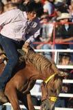 Cowboy op wilde rit stock foto