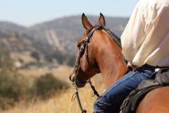 Cowboy på en häst. Arkivfoto