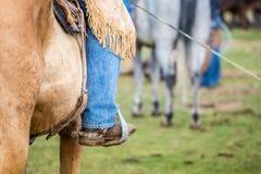 Cowboy på en häst royaltyfri foto