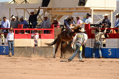 A Cowboy participates in bucking horse competition Royalty Free Stock Photos