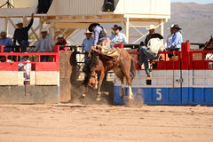 A Cowboy participates in bucking horse competition. Sacaton, Arizona United States, March 16, 2014: Mul-Chu-Tha Rodeo contestants - Bucking horse Bronc busting Royalty Free Stock Images