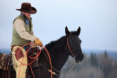 Cowboy preparing to rope royalty free stock photography