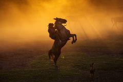 Cowboy puting his horse to stay in two feets at sunset with dust. In background royalty free stock photos