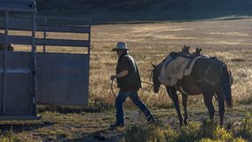 Cowboy puts horse back in trailer, Hastings Mesa, Last Dollar Ra. OCTOBER 4, 2017 - Cowboy puts horse back in trailer, Hastings Mesa, Last Dollar Ranch, Ridgway stock photos