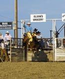 Cowboy reitet ein sträubendes Pferd am Rodeo stockfotografie