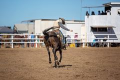 Bareback Bucking Bronc Riding At Country Rodeo. Cowboy rides a bucking horse in bareback bronc event at a country rodeo Stock Image
