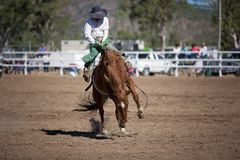 Bareback Bucking Bronc Riding At Country Rodeo. Cowboy rides a bucking horse in bareback bronc event at a country rodeo Stock Photos