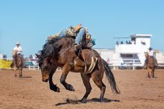 Bareback Bucking Bronc Riding At Country Rodeo. Cowboy rides a bucking horse in bareback bronc event at a country rodeo Royalty Free Stock Image