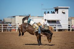 Bareback Bucking Bronc Riding At Country Rodeo. Cowboy rides a bucking horse in bareback bronc event at a country rodeo Stock Images