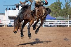 Bareback Bucking Bronc Riding At Country Rodeo. Cowboy rides a bucking horse in bareback bronc event at a country rodeo Stock Photo
