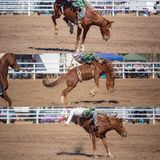 Cowboy Riding Bareback Bucking Bronco Collage. Collage of a cowboy riding a bucking bronco in the bareback bronc event at a country rodeo royalty free stock photography
