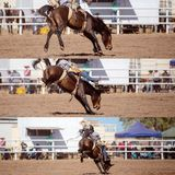 Cowboy Riding Bareback Bucking Bronco Collage. Collage of a cowboy riding a bucking bronco in the bareback bronc event at a country rodeo stock photography