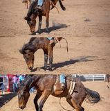 Cowboy Riding Bareback Bucking Bronco Collage. Collage of a cowboy riding a bucking bronco in the bareback bronc event at a country rodeo stock image