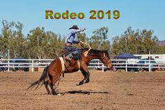 Rodeo 2019 Text - Cowboy Riding A Bucking Bronc Horse At A Country Rodeo royalty free stock photography