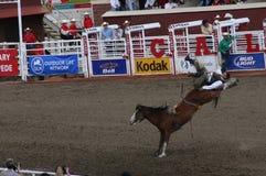 Cowboy riding bucking bronco. CALGARY CANADA JULY 2004 -  Cowboy riding bucking bronco, Calgary Stampede, Alberta, Canada Stock Images