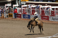 Cowboy riding bucking bronco. CALGARY CANADA JULY 2004 -  Cowboy riding bucking bronco, Calgary Stampede, Alberta, Canada Royalty Free Stock Photography