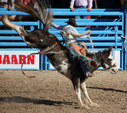 Cowboy riding bucking bronco. A cowboy tries to ride a bucking  bronco during the rodeo. Taken at the Tucson Rodeo also known as La Fiesta de Los Vaqueros in Stock Photography