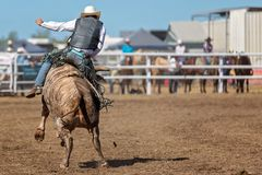 Bucking Bull Riding At A Country Rodeo. Cowboy riding a bucking bull in a competition at an Australian country rodeo royalty free stock photos