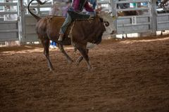 Cowboy On A Bucking Bull At Rodeo. Cowboy riding a bucking bull at an indoor country rodeo Royalty Free Stock Photography