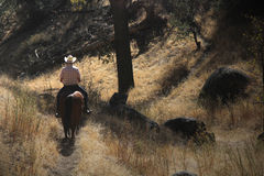 A cowboy riding down a hill. A cowboy is riding his horse down a mountain trail in the tall golden brush stock photography