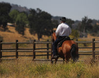 A cowboy riding his horse along a fence. A cowboy is riding his bay horse in a meadow along a fence stock photos