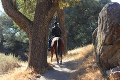 A cowboy riding on his horse in a canyon. A cowboy riding on his horse in a canyon with oak trees and boulders stock images