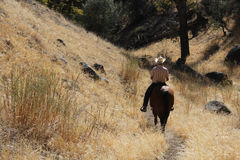 A cowboy riding on his horse down a canyon. A cowboy riding on his horse in a golden meadow down a canyon Royalty Free Stock Photography
