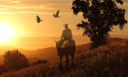 A cowboy riding his horse in a meadow of golden grass. A cowboy riding his horse in a yellow and orange meadow with a silhouette of mountains in the background Royalty Free Stock Photography