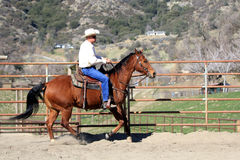 A cowboy riding his horse. A cowboy riding his horse in a round pen for training Royalty Free Stock Images
