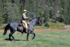 Cowboy Riding Horse #1. Cowboy riding blue roan horse - panning shot with some motion blur stock images