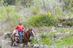 Cowboy Riding Horse Arkivbild