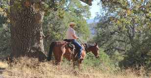 A cowboy riding a horse. A cowboy riding his horse stops to overlook the valley in the sun stock photography
