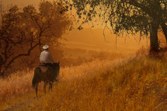 A cowboy riding a horse VIII. A cowboy is riding his horse in a golden meadow with trees royalty free stock photo