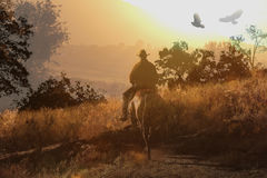 A cowboy riding a horse V. A cowboy is riding through a meadow on his horse with birds and trees into the sunset stock photos