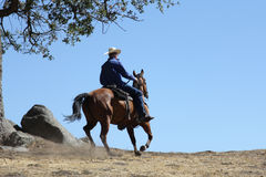 A cowboy riding in a meadow with trees up a mountain with a plain blue sky. royalty free stock photos