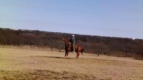 Cowboy Riding Off aux bétail de rassemblement Image libre de droits