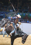 Cowboy in Rodeo Stock Fotografie