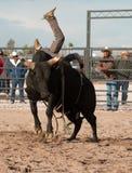 Cowboy Rodeo Bull Riding Stockfotos