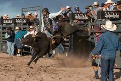Cowboy Rodeo Bull Riding Royaltyfri Foto