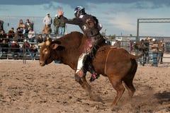Cowboy Rodeo Bull Riding Stockbilder