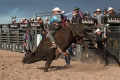 Free Cowboy Rodeo Bull Riding Royalty Free Stock Photo - 63799415